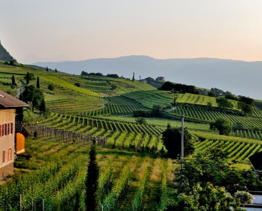 山あいの緑緑した畑の画像