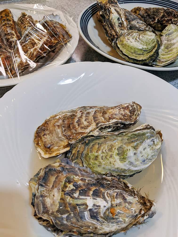 カキフライに使う牡蠣3皿18個の画像