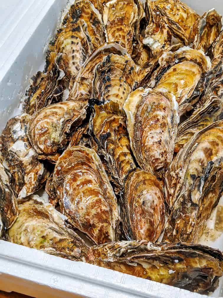 発泡スチロールの箱いっぱいにはいった殻付きの牡蠣